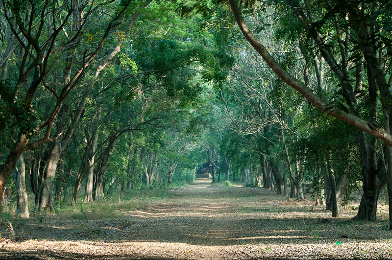 Forest pathway at the center of IISc campus.