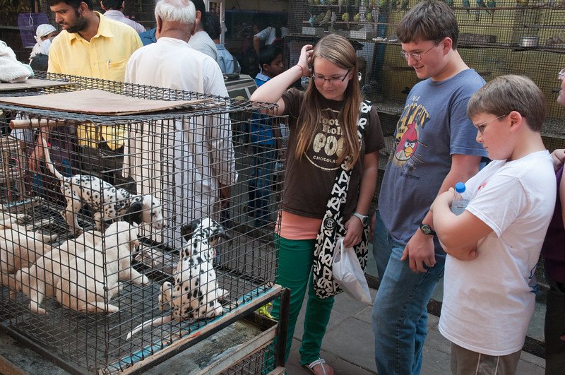Crawford Market; the kids examine the puppies at the pet store.