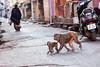 Street of Jaipur