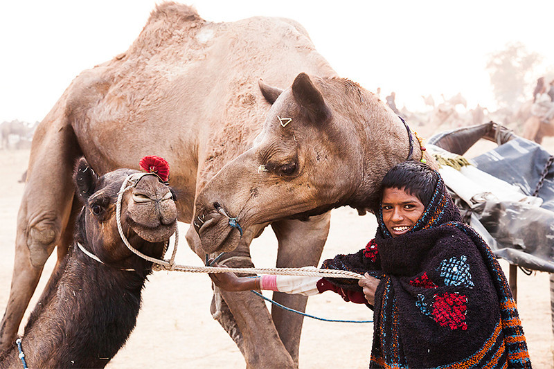 "Pushkar Camel Fair<br /> <br /> This young man was trying to get the two camels to ""kiss"" for me."
