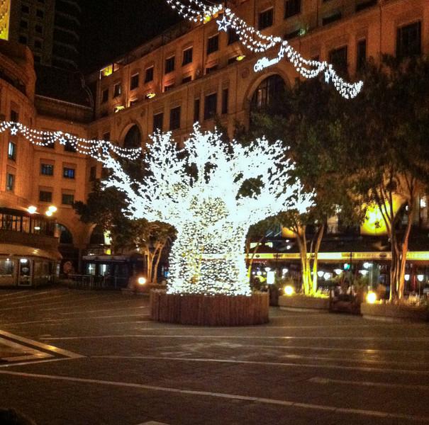 Baobab Christmas Tree