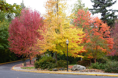 Lithia Park Ashland Orgeon October 2012