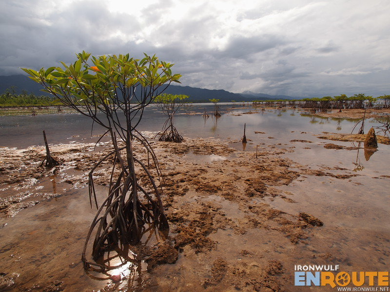 The mangroves at Dicatian
