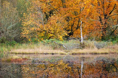 Falls colors in at Nisqually National Wildlife Refuge