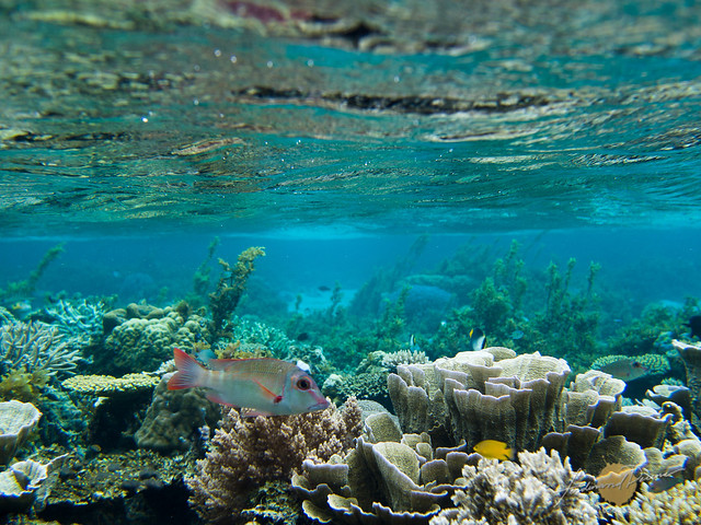 Corals and fish on shallow water