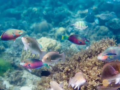 Noanoa Island Underwater