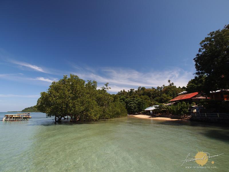 A strip of beach behind some mangroves