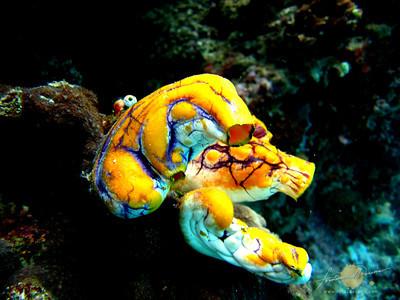 Bunaken Island Snorkeling