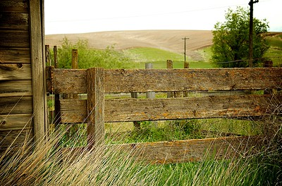 Fence Posts and Barb Wire