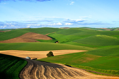 Lines and Shadows in the Palouse