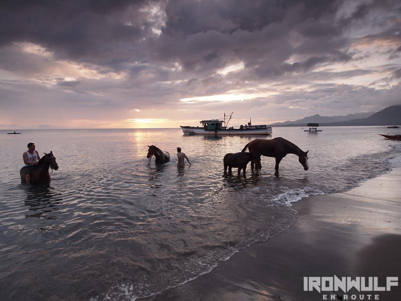 Horses bathing at the shore