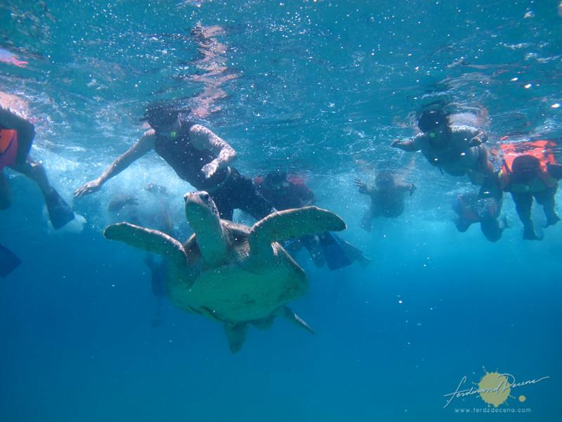 Chasing sea turtles at Perhentian Islands