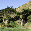 Santa Cruz Island has been occupied for a least 9,000 years.  It was home to the largest population of island Chumash Indians.