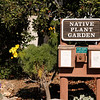 Native Plant Garden in front of Visitors Center