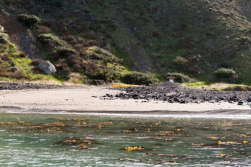Kelp Forest around the Scorpion Anchorage