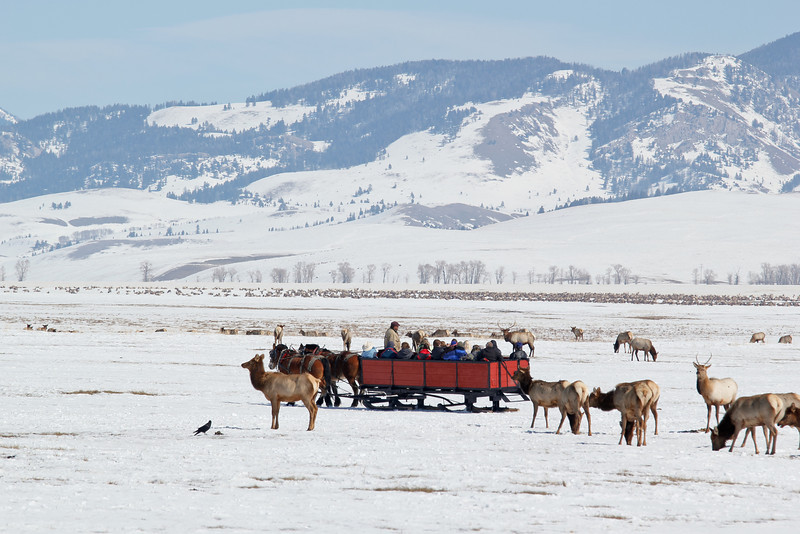 Another sleigh on the Refuge