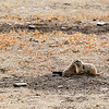 Spotted some prairie dogs on the way to the Visitor Center
