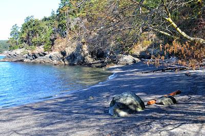 The beach at San Juan Island County Park.