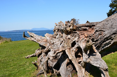 Interesting driftwood tree at the park.