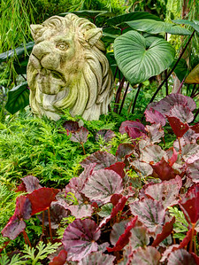Lion guarding the entrance to an area of the Orchid garden