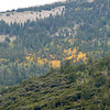 View from Mather Overlook. Aspens are changing color!