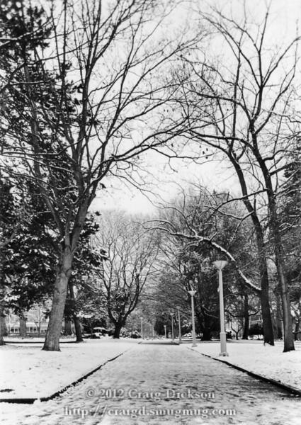 Snowy park 1