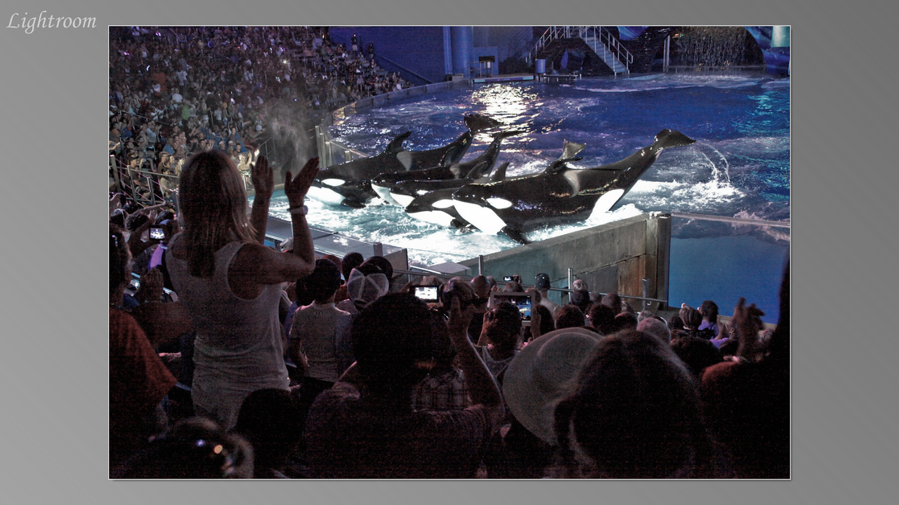2012_04_05-2 (Orlando Sea World)-344