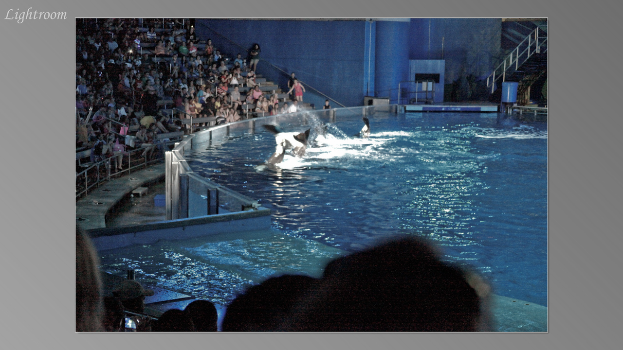 2012_04_05-2 (Orlando Sea World)-339