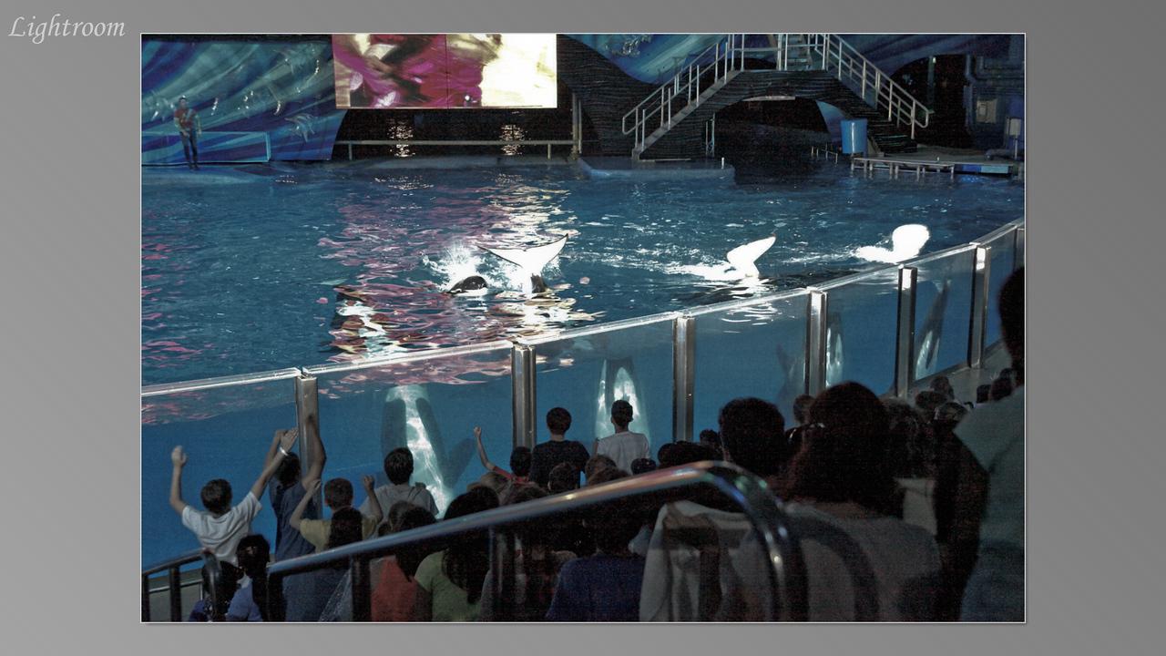 2012_04_05-2 (Orlando Sea World)-341