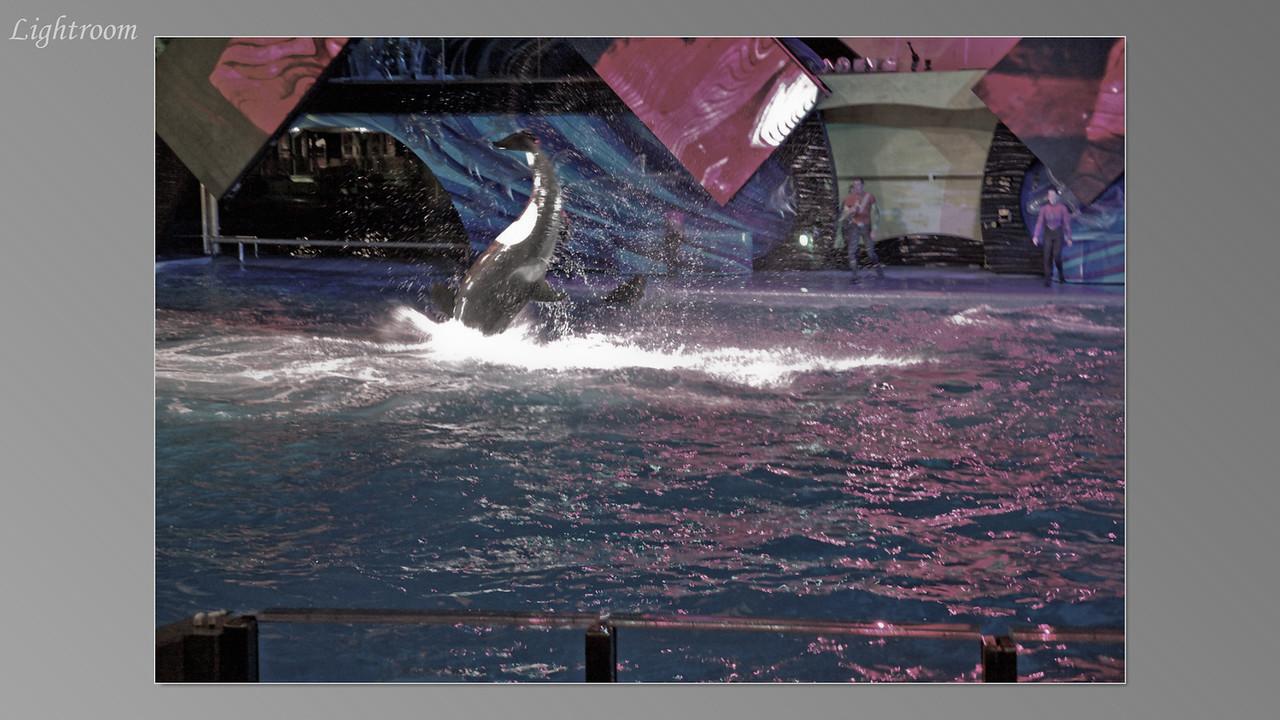 2012_04_05-2 (Orlando Sea World)-337