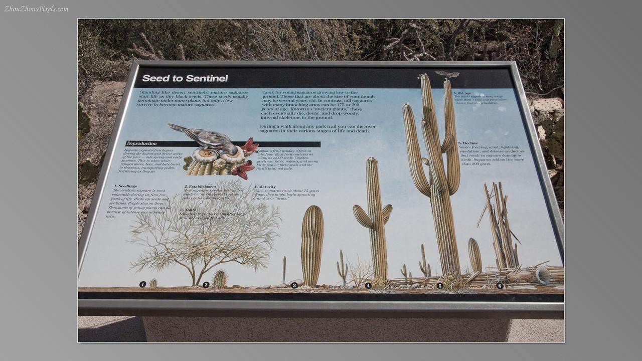 2012_05_14-2 (Saguaro & Desert Museum)-08