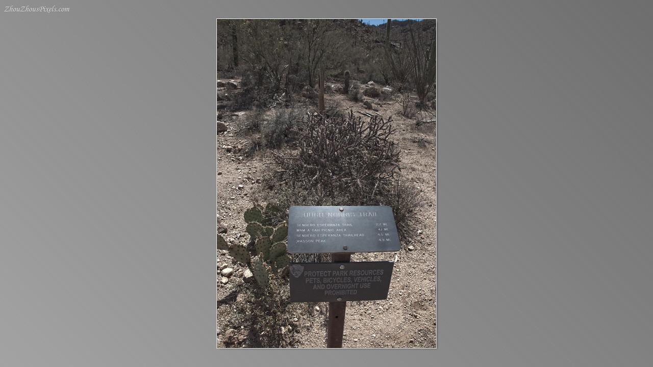 2012_05_14-2 (Saguaro & Desert Museum)-23