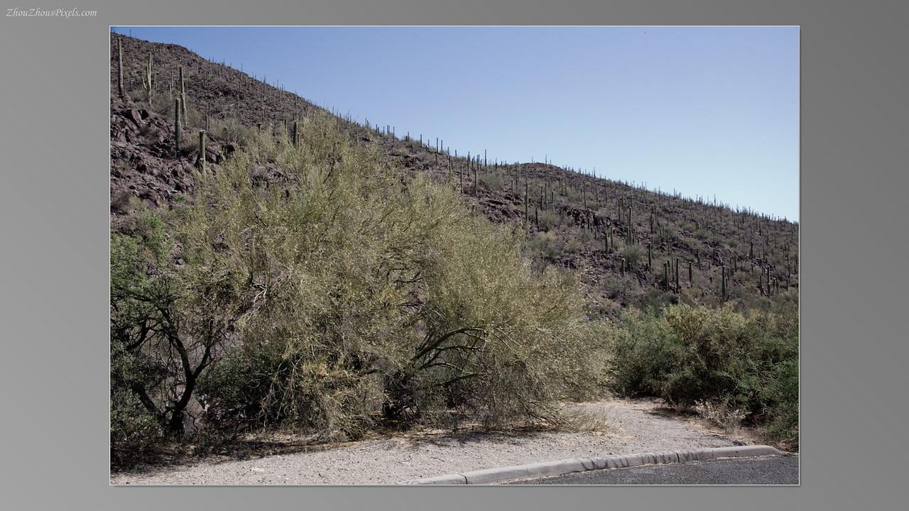 2012_05_14-2 (Saguaro & Desert Museum)-06