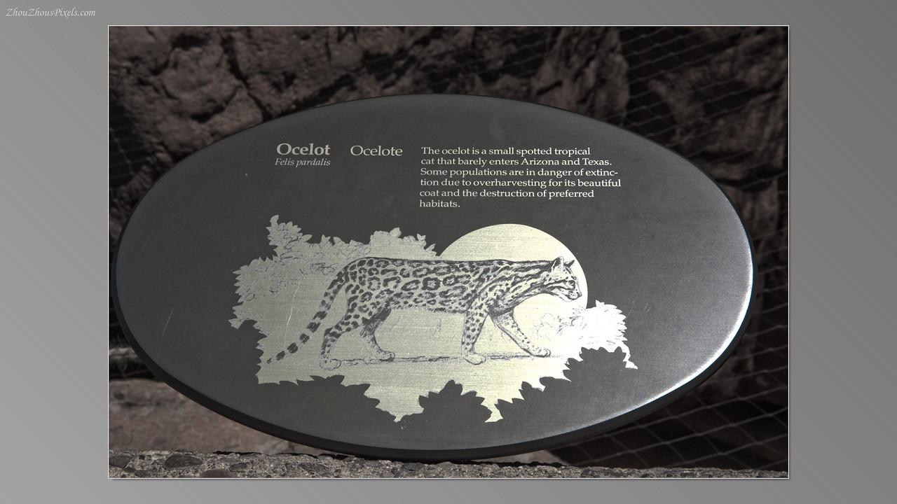2012_05_14-2 (Saguaro & Desert Museum)-47