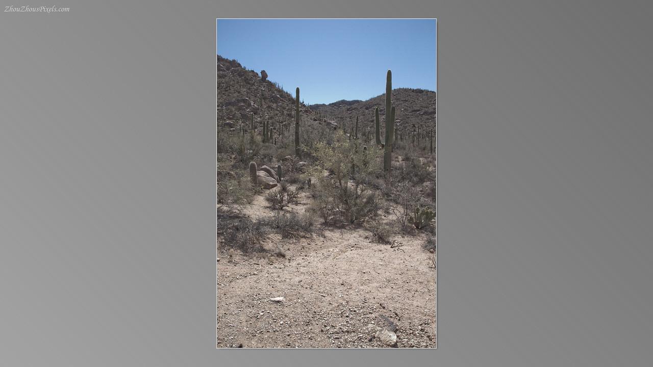 2012_05_14-2 (Saguaro & Desert Museum)-28