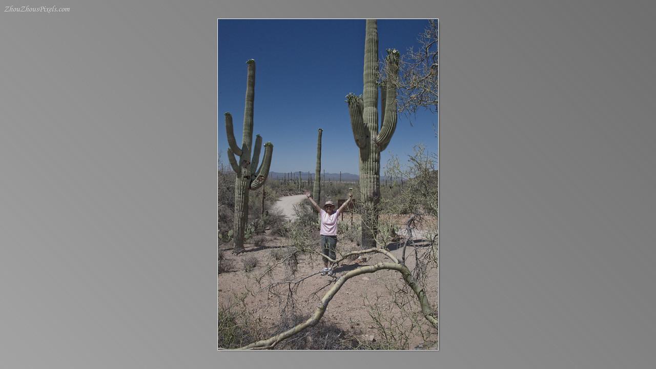 2012_05_14-2 (Saguaro & Desert Museum)-19