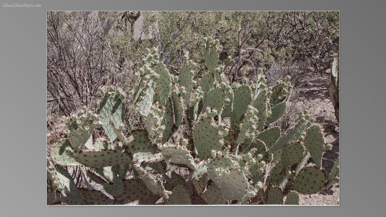 2012_05_14-2 (Saguaro & Desert Museum)-11
