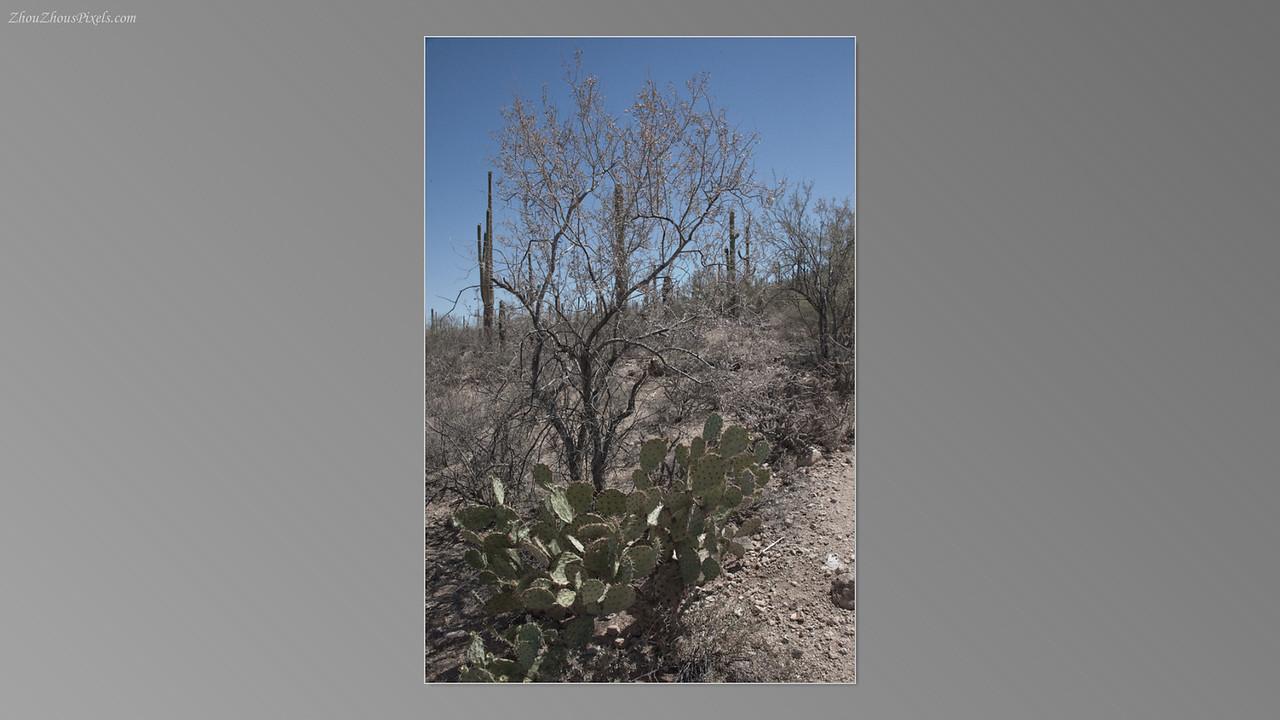 2012_05_14-2 (Saguaro & Desert Museum)-27