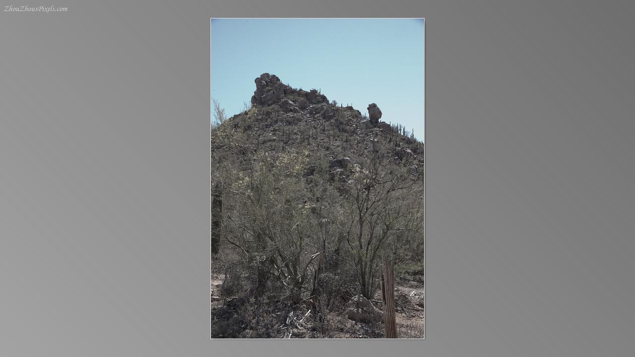 2012_05_14-2 (Saguaro & Desert Museum)-24
