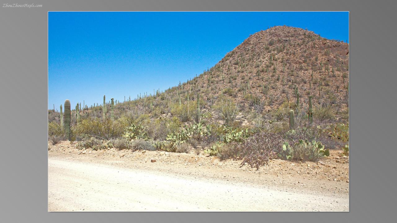 2012_05_14-2 (Saguaro & Desert Museum)-31