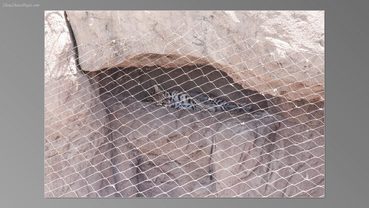 2012_05_14-2 (Saguaro & Desert Museum)-46