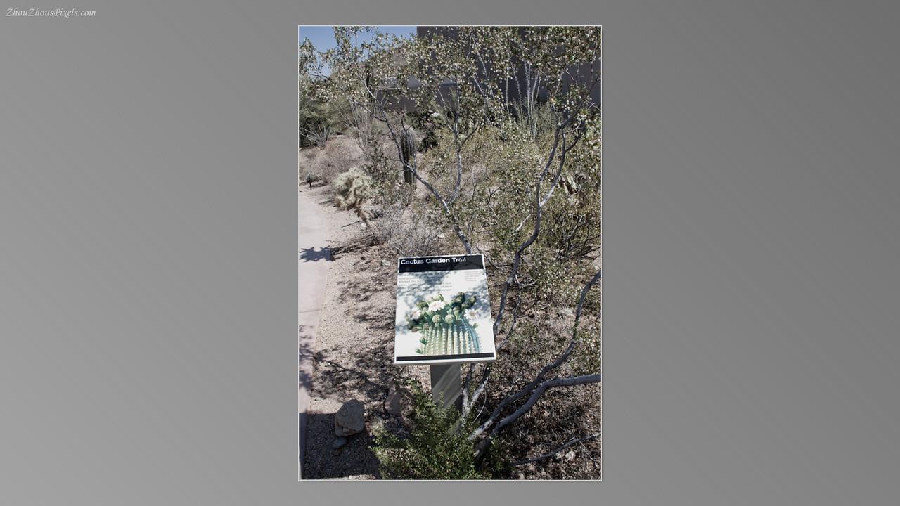 2012_05_14-2 (Saguaro & Desert Museum)-12