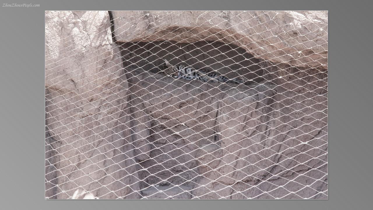 2012_05_14-2 (Saguaro & Desert Museum)-45