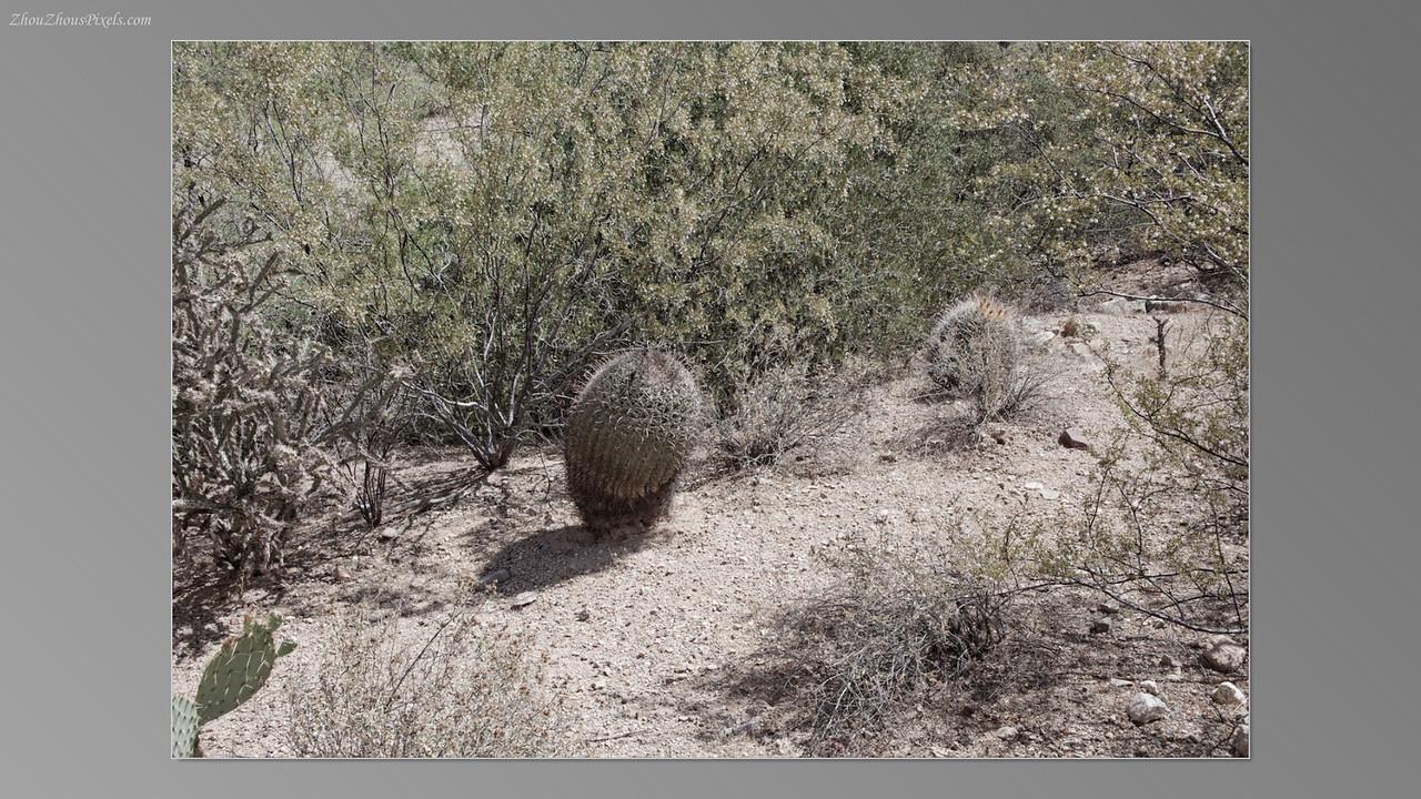 2012_05_14-2 (Saguaro & Desert Museum)-10