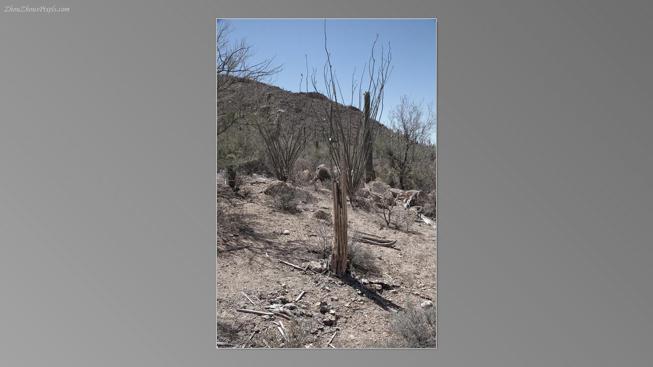 2012_05_14-2 (Saguaro & Desert Museum)-25