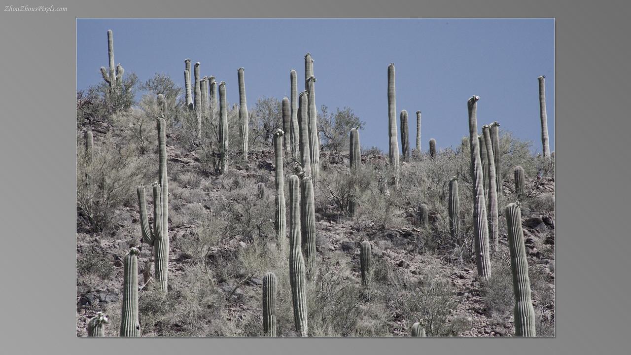 2012_05_14-2 (Saguaro & Desert Museum)-03