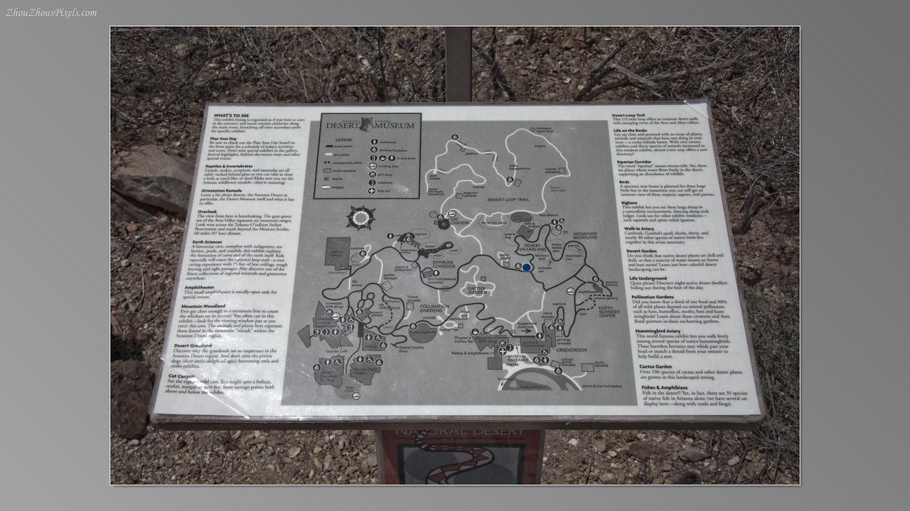 2012_05_14-2 (Saguaro & Desert Museum)-35