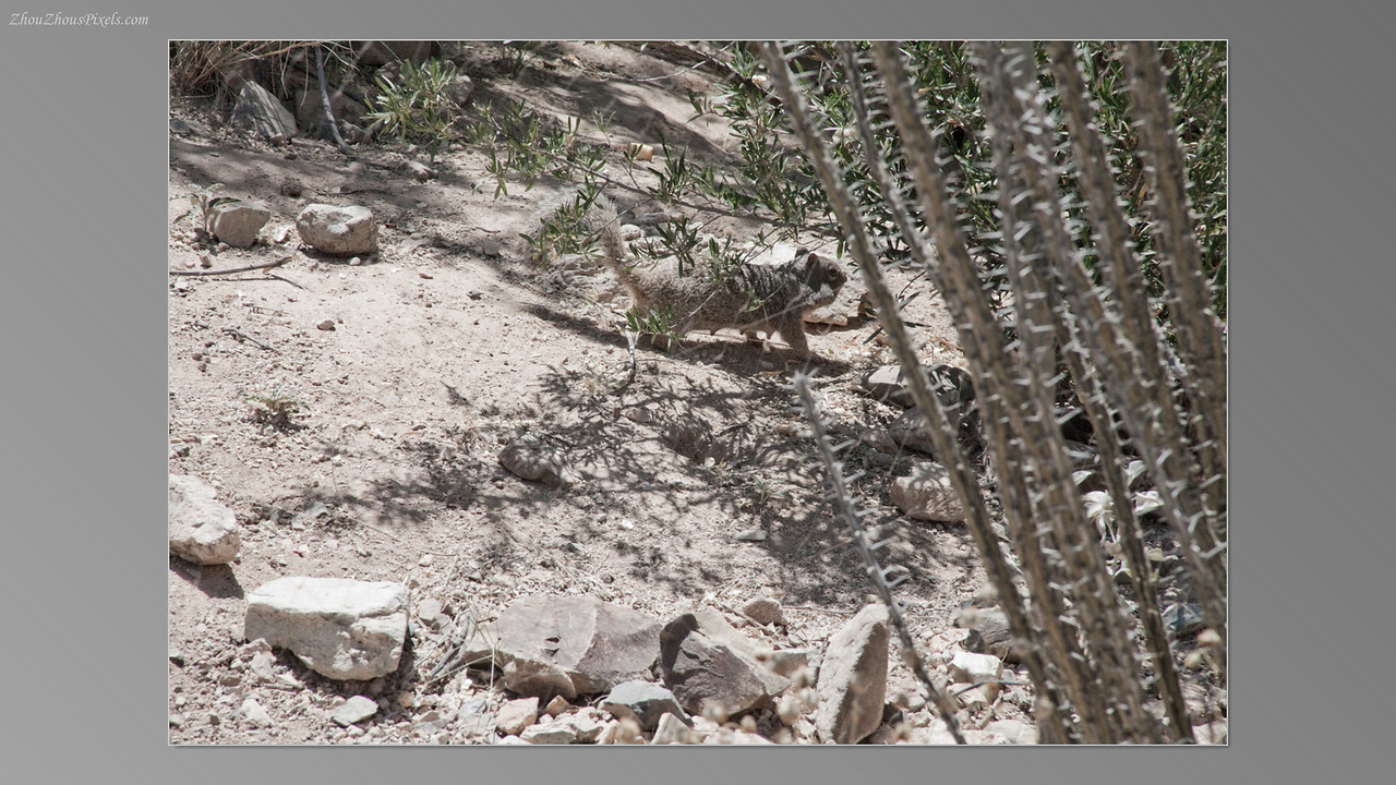 2012_05_14-2 (Saguaro & Desert Museum)-40