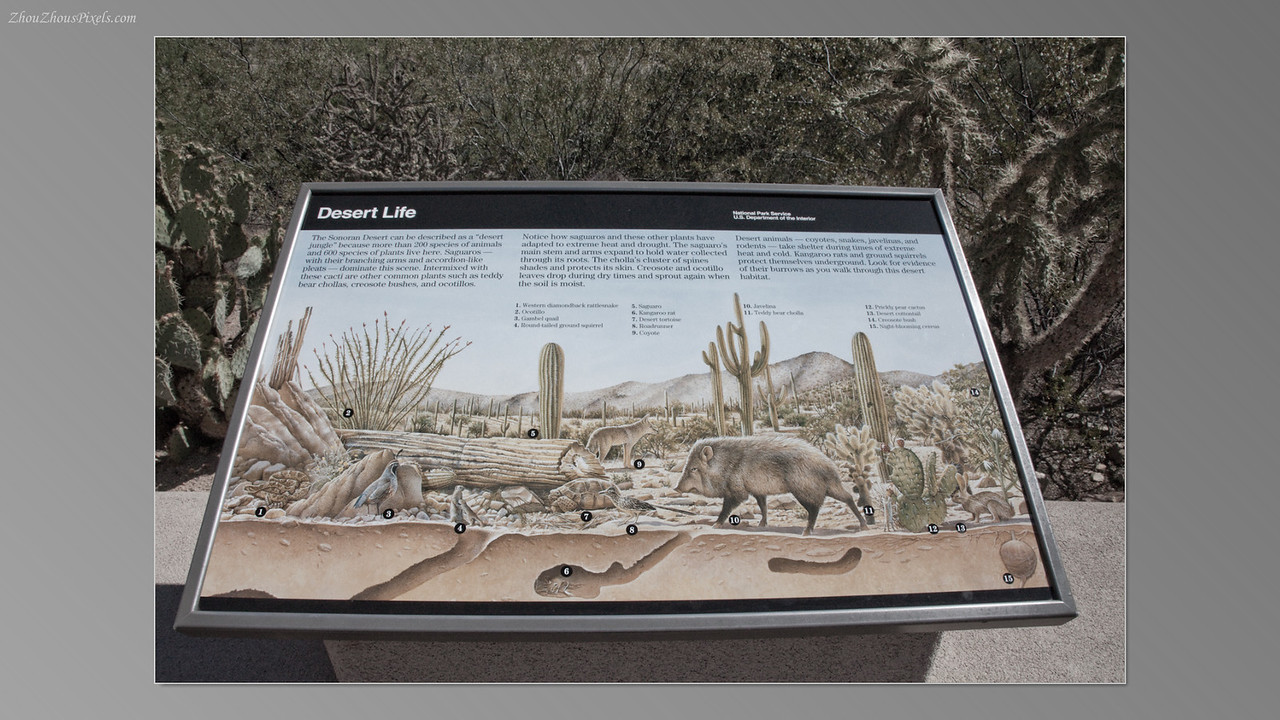 2012_05_14-2 (Saguaro & Desert Museum)-09