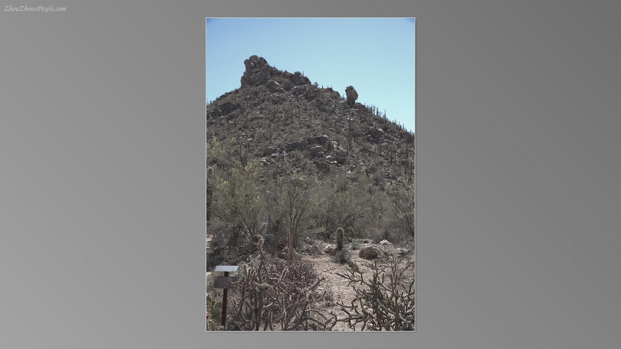 2012_05_14-2 (Saguaro & Desert Museum)-22